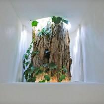 Lichtbomen-trunk-docu-web-1