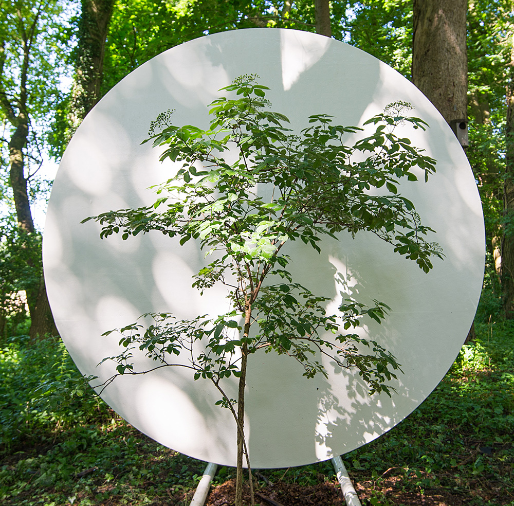 Portable-Site-TREE-web-9